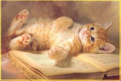 قط مل من القراءة