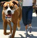 etoo : chiens