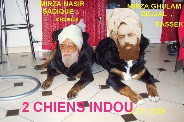 mirza_fassek : les 2 chiens des  britanniques
