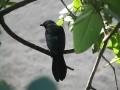 tn-un-oiseau-noir