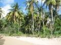 tn-cocotiers-sur-la-plage-vigie
