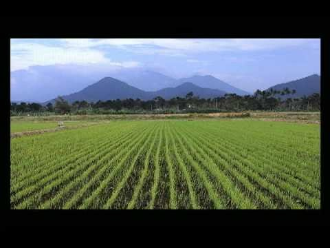 112 » Rice-growing time-lapse--112 days
