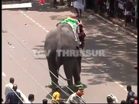 Elephant Attcak in Thrissur Pooram  2013